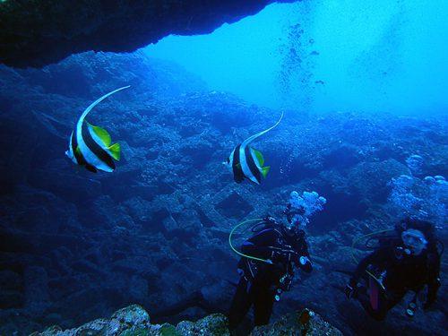 アーチの下には色々魚も集まってたり