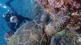 スッキリ晴れの八丈島、うねりはあるが底土と八重根で体験ダイビング