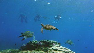 青空も広がりだしてた八丈島、若干うねる底土でシュノーケリング