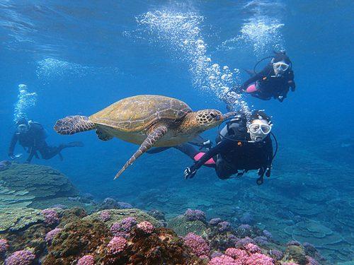 アオウミガメと一緒に体験ダイビング