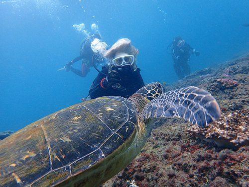 近くに寄ってアオウミガメを撮ってみて