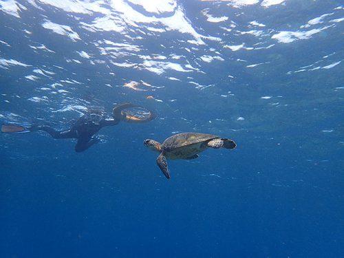 ゆっくり近づきアオウミガメを眺めてみたり