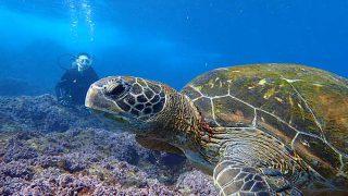 爽やかな青空広がる八丈島、うねりは残るが底土で体験ダイビング