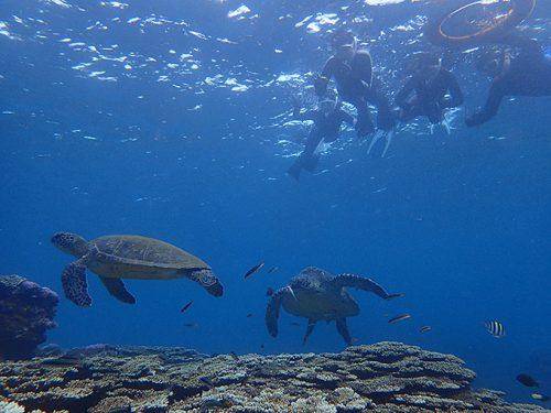サンゴのところにカメ2匹