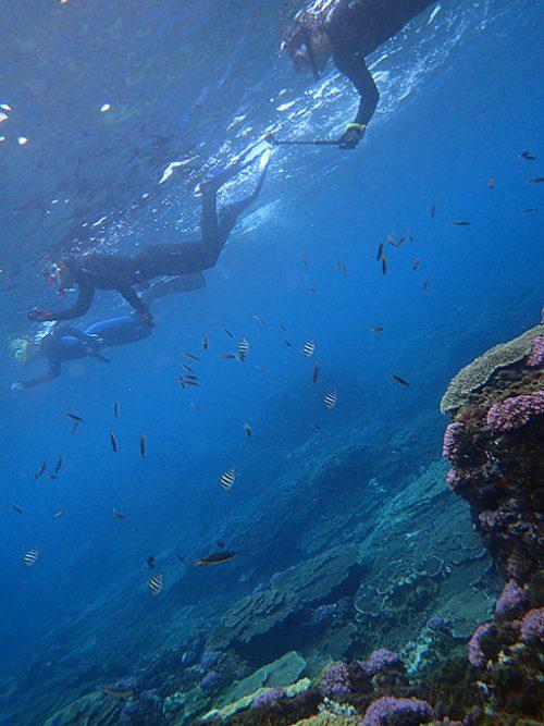 サンゴの広がる海には魚もたくさん