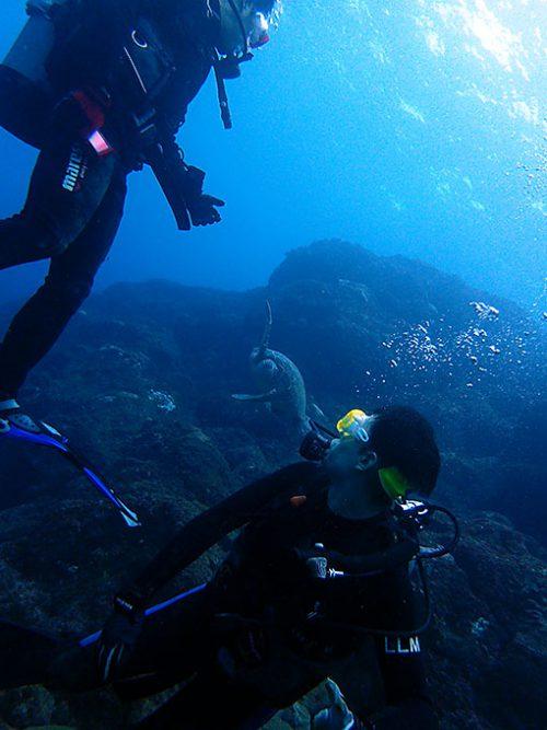 後ろからアオウミガメが泳いできてたり