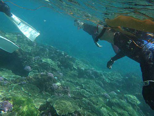 沖に出てくとサンゴも広がりだしてきて