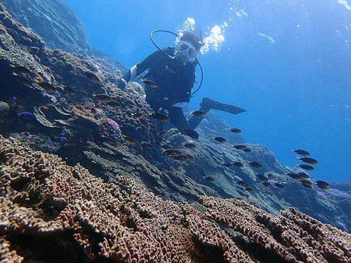 サンゴの上にも魚がたくさんで