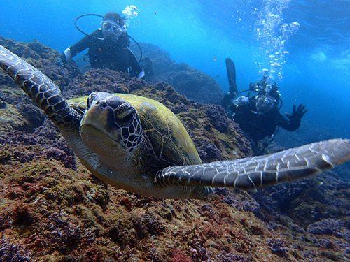 今日も底土でカメと一緒に体験ダイビング