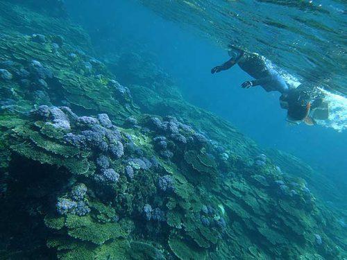サンゴの上を泳いで周り