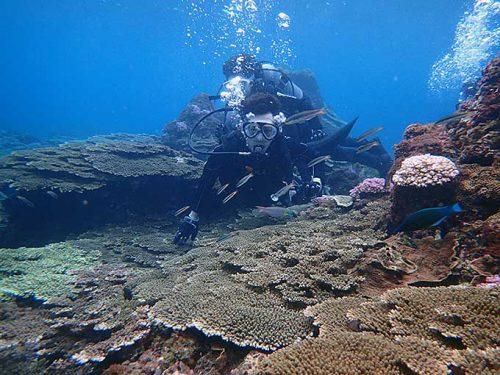 今日は浅場をグルッと周り色リオ魚も見てみたり