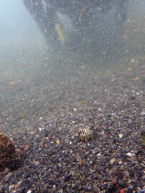 砂の中にアカエソが隠れていたり