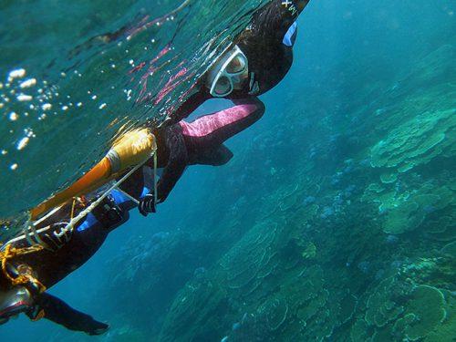 魚も見つつサンゴの海を泳いで周り