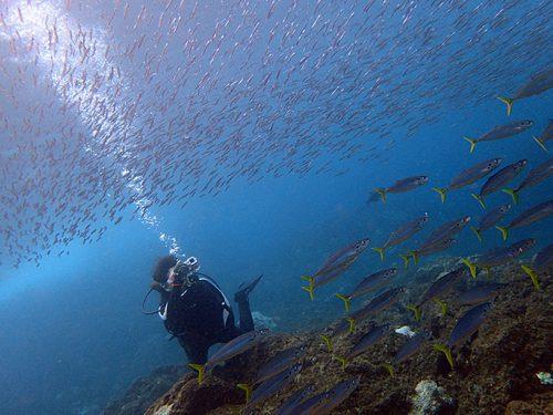 湾内魚もたくさんで