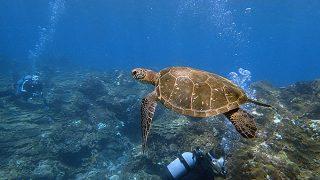 青空広がる八丈島、手前はペッタリな底土で体験ダイビング