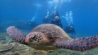 日差しも強く暑くなってた八丈島、底土と八重根で体験ダイビング