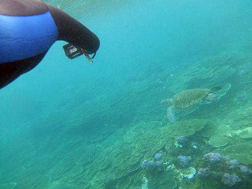 ちょっと沖まで泳げばアオウミガメも見られたり
