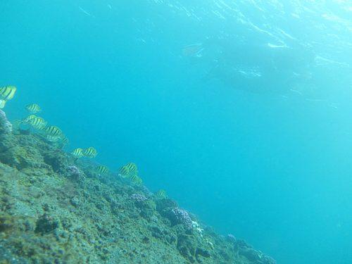 下の方には色々魚もおりまして