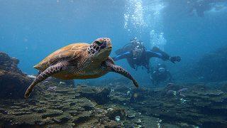 晴れ間もあるが雨も降っていた八丈島、落ち着く底土で体験ダイビング