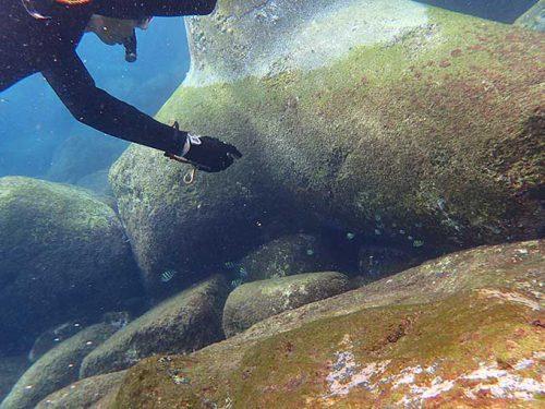 浅場で色々魚を見たり