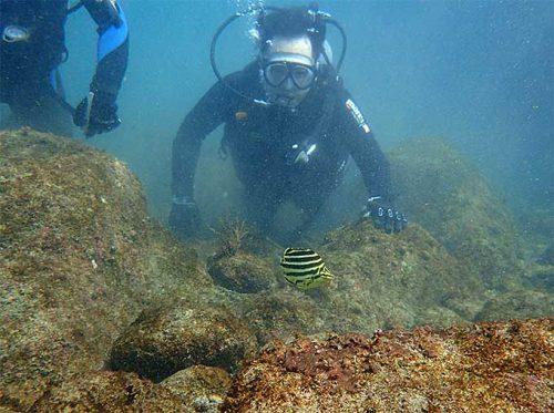 タイドプールで魚を見つつ海に慣れ