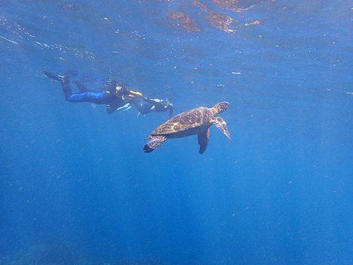 みんなで今日もアオウミガメを見に行って