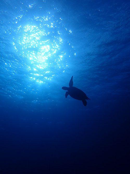 水も綺麗でアオウミガメもたくさん見られ