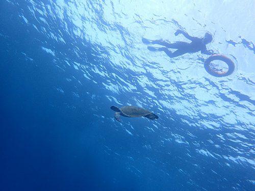 沖まで行けば今日もカメはたくさん見られ