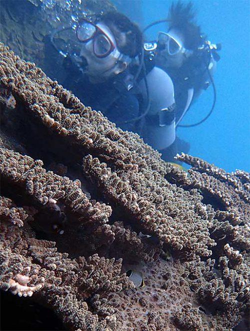 サンゴの間に隠れてるヤリカタギの子ども