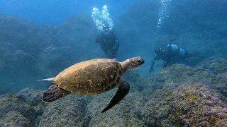 冬晴れ続く八丈島、湾内ペッタリ凪いでもいた八重根で体験ダイビング