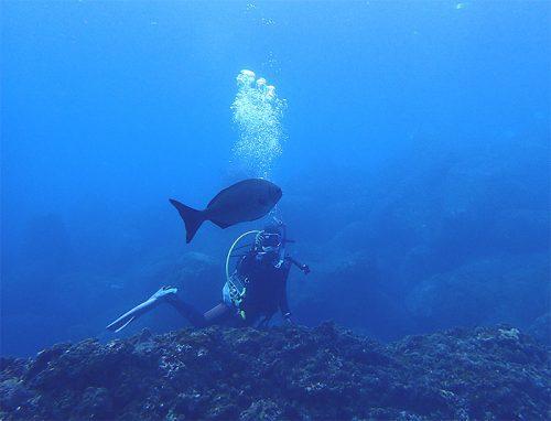 イスズミなんかの大きな魚も見てみたり
