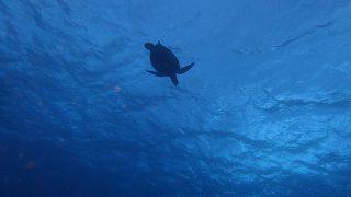冬の寒さも戻ってきていた八丈島、うねりは残るが八重根でダイビング