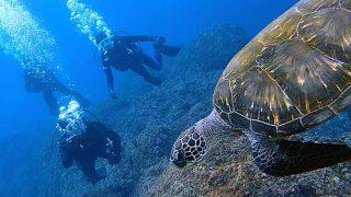 青空も広がり出してた八丈島、うねりも弱まる八重根で体験ダイビング