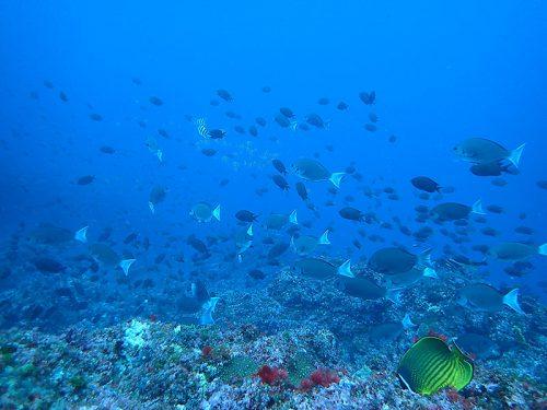 色々魚が集まってたり
