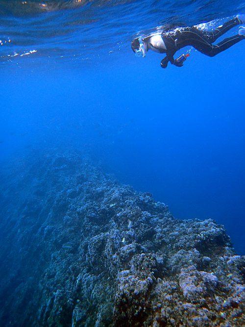 魚を見ながら根上を泳ぎ