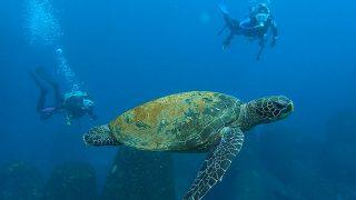青空広がる八丈島、穏やかになってきていた八重根でダイビング