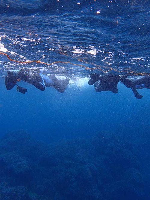 沖に出てくと水も綺麗になっていき