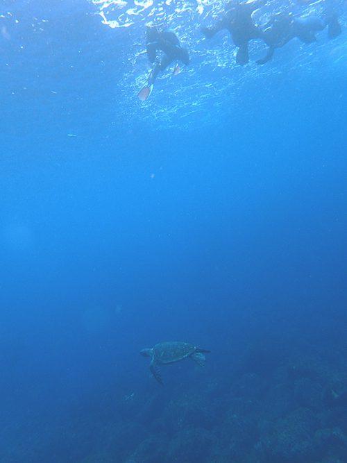 みんなの下をアオウミガメが泳いでいって