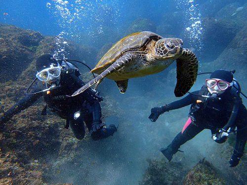 小さいウミガメ目の前泳ぎ