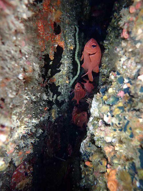 亀裂の中には赤っぽい魚がたくさんいたり