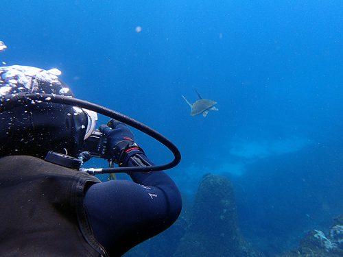 とりあえず、遠くで泳ぐウミガメ見てみて