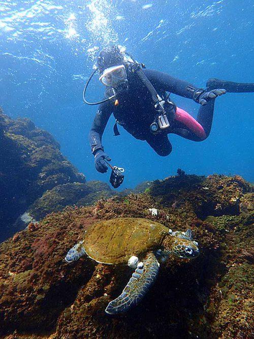 ウミガメと一緒に泳いでみたり
