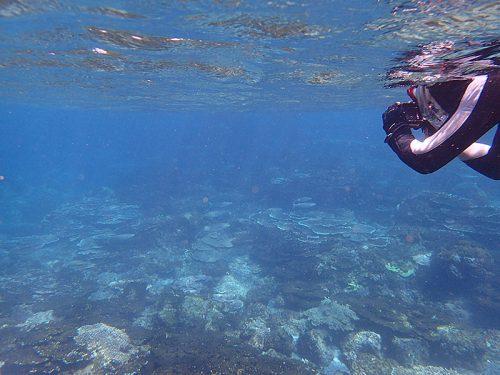 ボラとか見ながら沖まで泳ぎ