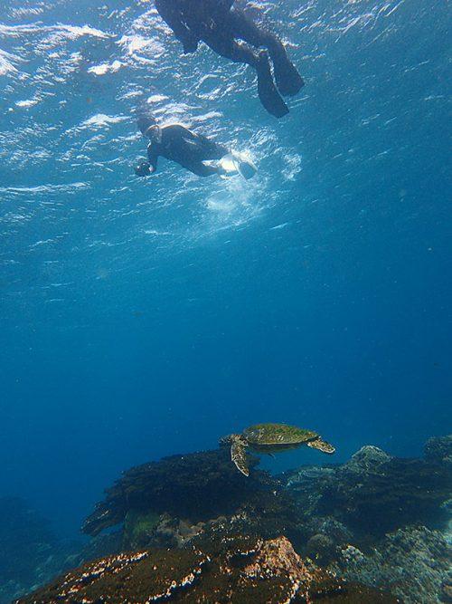 小さいウミガメと一緒に泳いでみたり