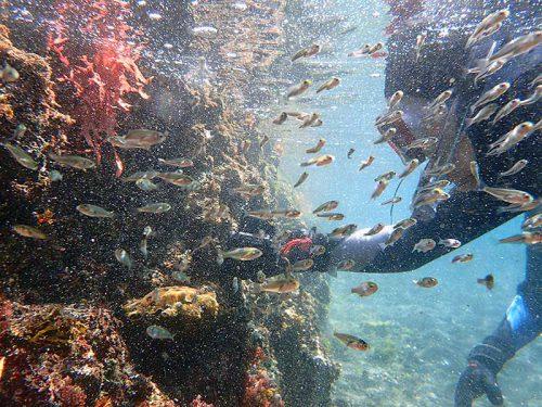 水面付近にはちっこい魚も集まってたり