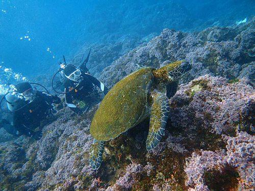 ゆっくり近づき間近でウミガメ見てみたり