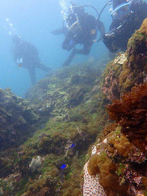 岩の陰には綺麗な魚もちらほら見られ