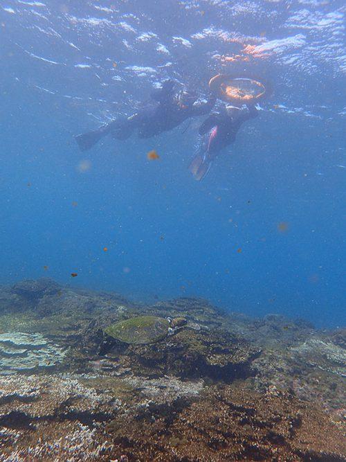 小さいウミガメ上から見ていき