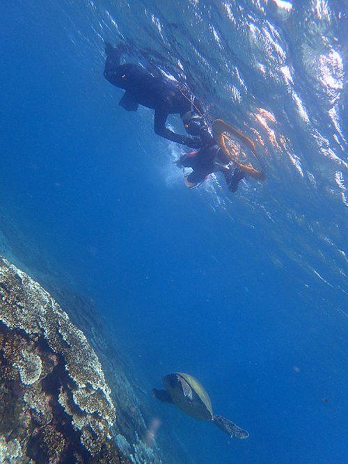 すぐ下ウミガメ泳いでいって