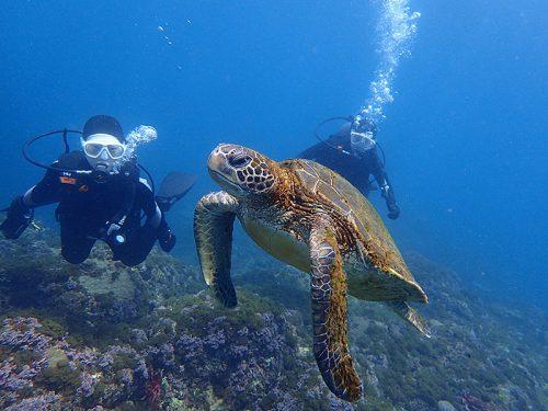 体験ダイビングでアオウミガメと一緒に泳げたり